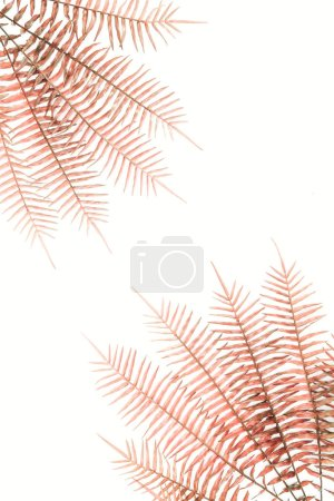 view from above of arranged red fern branches isolated on white