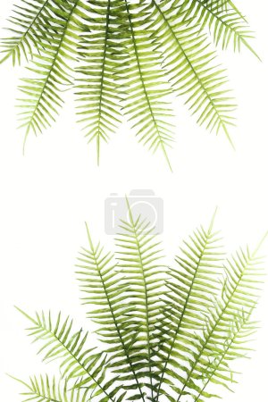 top view of arranged beautiful green fern branches isolated on white