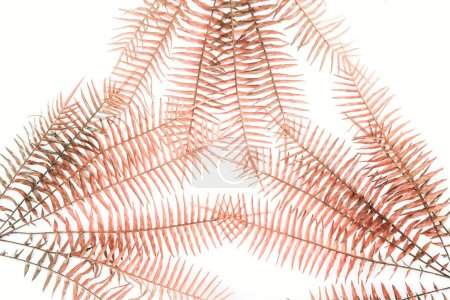 flat lay with beautiful red fern branches isolated on white