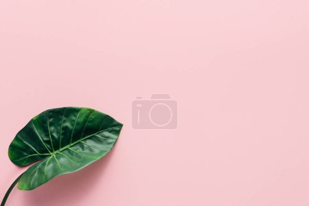 Photo for Top view of green palm leaf on pink, minimalistic concept - Royalty Free Image