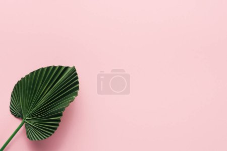 Photo for Flat lay with green palm leaf on pink, minimalistic concept - Royalty Free Image