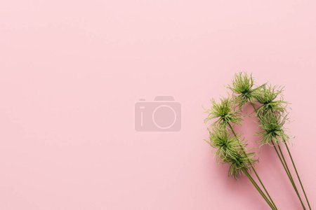 Photo for Top view of green tropical plant on pink, minimalistic concept - Royalty Free Image