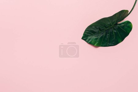 elevated view of green tropical leaf on pink, minimalistic concept
