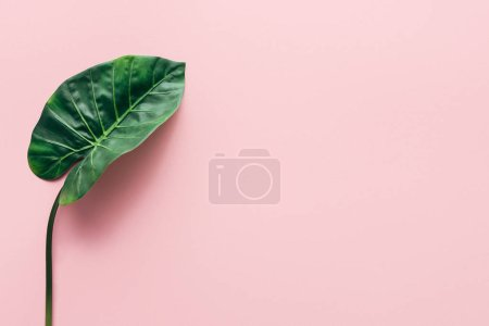 Photo for Flat lay with green beautiful palm leaf on pink, minimalistic concept - Royalty Free Image
