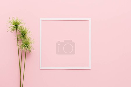 flat lay with white frame and green plant on pink, minimalistic concept