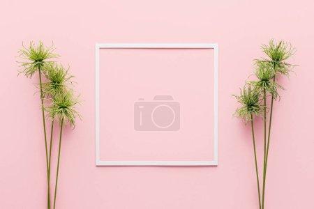 Photo pour Vue de dessus du cadre blanc entre les plantes vertes sur rose - image libre de droit