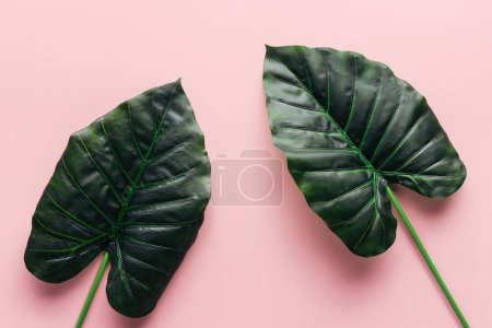 Photo for Top view of green palm leaves on pink, minimalistic concept - Royalty Free Image