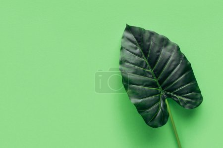 elevated view of palm leaf on green, minimalistic concept
