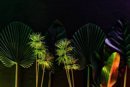 top view of various tropical leaves placed in row with red lighting