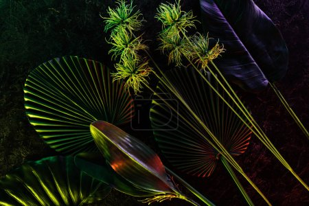 Photo for Flat lay with arranged various tropical leaves with red lighting - Royalty Free Image