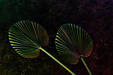 view from above of beautiful tropical leaves with red lighting