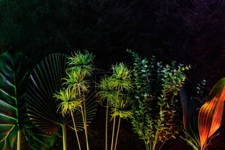 elevated view of various tropical leaves placed in row with red lighting