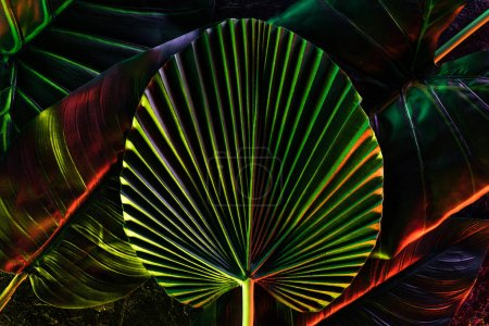 toned picture of various tropical leaves with red lighting
