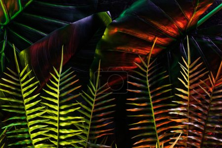 colored picture of beautiful various leaves with red lighting