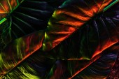 full frame image of beautiful palm leaves with red lighting