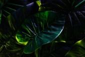 """Постер, картина, фотообои """"полный кадр изображения красивых пальм листья фон"""""""