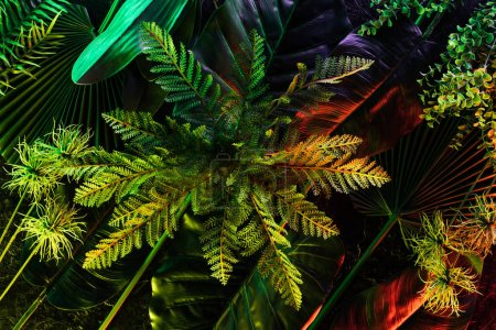 full frame of various beautiful tropical leaves and plants with red lighting