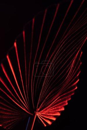 Photo pour Image tonique de belle feuille tropicale avec éclairage rouge isolé sur noir - image libre de droit