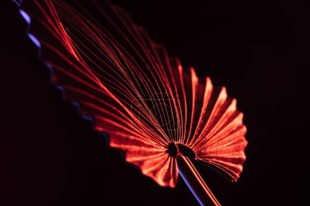 close up of beautiful tropical leaf with red lighting isolated on black
