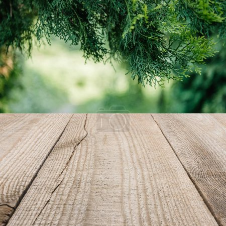 surface of beige wooden planks with cropped pine tree leaves on background