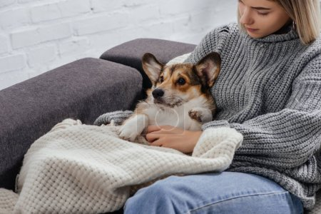 young woman sitting on sofa with funny pembroke welsh corgi covered in blanket