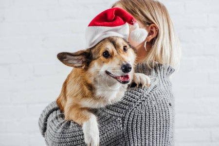 Foto de Girl in grey sweater holding cute pembroke welsh corgi dog in santa hat on white - Imagen libre de derechos