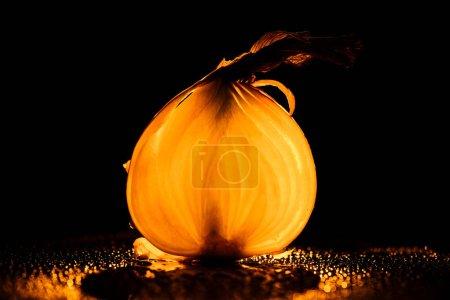 Photo pour Tranche d'oignon cru avec des gouttes d'eau et de rétro-éclairage sur fond noir orange - image libre de droit