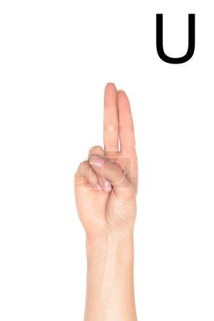 Photo pour Vue recadrée de la main féminine montrant la lettre latine - U, langage sourd et muet, isolé sur blanc - image libre de droit