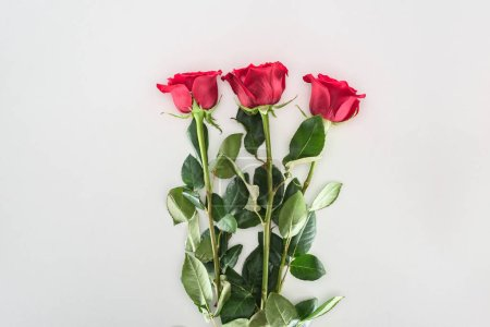 close-up view of beautiful tender red rose flowers isolated on grey