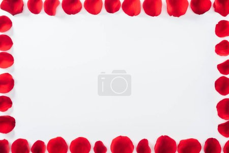 top view of square floral frame made with red rose petals isolated on white with copy space