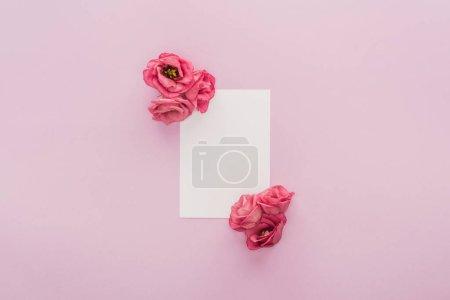 Photo pour Vue du haut des fleurs et carte blanche isolée sur rose - image libre de droit