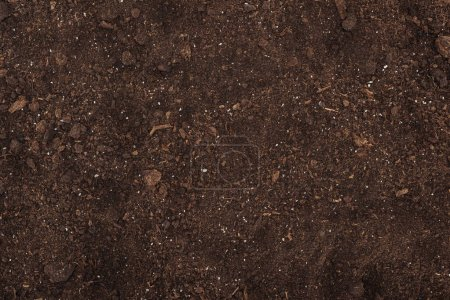 Photo for Top view of ground, protecting nature concept - Royalty Free Image