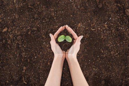 Photo pour Vue recadrée de la femme tenant le sol avec la plante verte dans les mains, la protection de la nature concept - image libre de droit