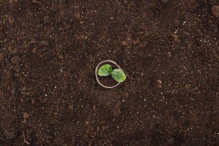 Photo pour Vue de dessus du pot avec la plante verte avec des feuilles, concept de protection de la nature - image libre de droit