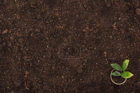 Photo pour Vue du dessus du pot avec petite plante aux feuilles vertes, protégeant le concept de la nature - image libre de droit