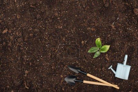 Photo pour Vue de dessus de la plante verte avec des feuilles près de jouet arrosoir et pelles, la protection de la nature concept - image libre de droit