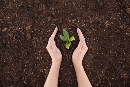 cropped view of woman holding hands near ground with green plant, protecting nature concept