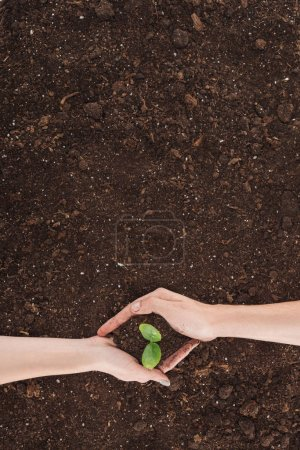 Photo for Cropped view of man and woman holding ground with plant in hands, protecting nature concept - Royalty Free Image