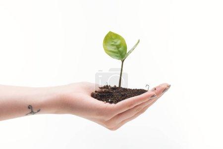Photo pour Vue recadrée de la femme tenant le sol avec la plante verte à la main isolé sur blanc - image libre de droit