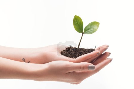 Photo for Cropped view of woman holding ground with green plant in hands isolated on white - Royalty Free Image
