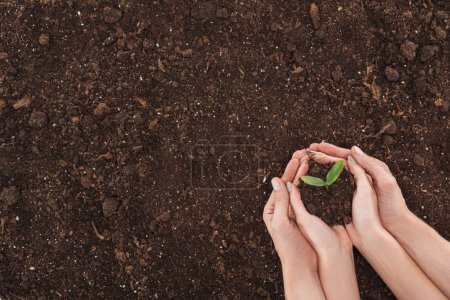 Photo for Cropped view of couple holding ground with small plant in hands, protecting nature concept - Royalty Free Image