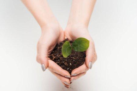 Photo pour Vue recadrée de la femme tenant le sol avec des feuilles vertes dans les mains isolées sur blanc - image libre de droit
