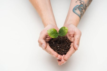 cropped view of man saving ground with green leaves in hands isolated on white