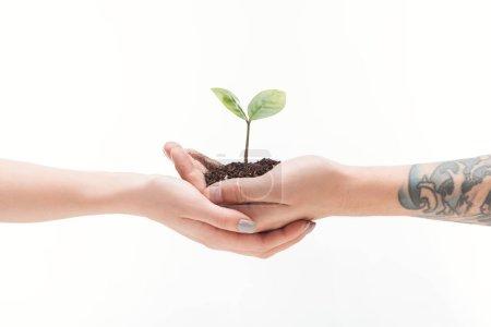 vista recortada de pareja sosteniendo suelo con planta en manos aisladas en blanco