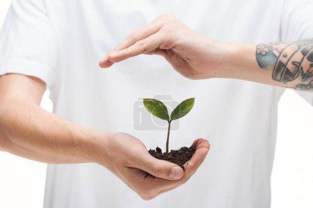 enfoque selectivo del hombre protegiendo el suelo con planta verde aislada en blanco