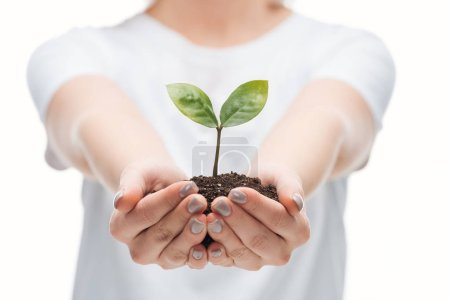 Photo pour Foyer sélectif de la femme sauver du terrain avec la plante verte isolé sur blanc - image libre de droit