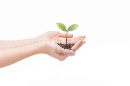 vista recortada de las manos femeninas sosteniendo el suelo con planta verde aislada en blanco