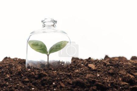 Photo pour Petite plante verte recouverte de bocal cloche isolé sur blanc - image libre de droit