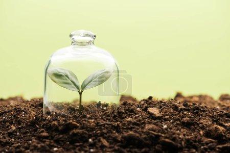 Photo pour Petite plante verte recouverte de bocal cloche isolé sur vert - image libre de droit