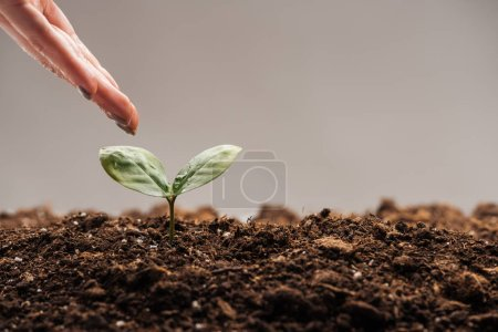 cropped view of woman holding hand near small green plant isolated on grey